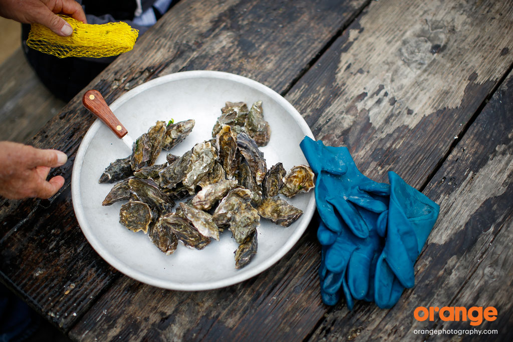 hog island oyster company tour